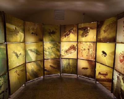 Музей янтаря Калининграда
