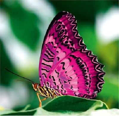 Экспозиция Тропических бабочек в Оранжерее Таврического сада