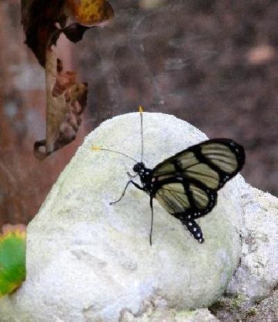 Музей бабочек и колибри