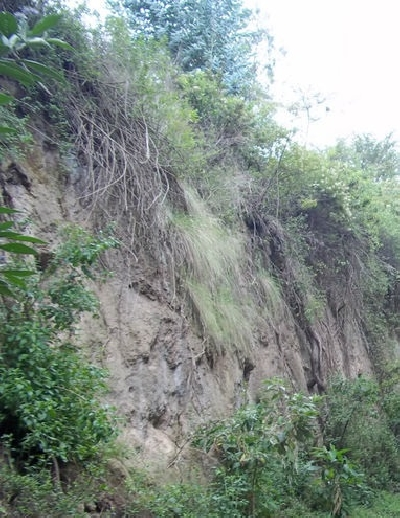 Долина Кумбайя