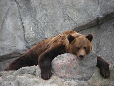 Ленинградский зоопарк и прогулка по Александровскому парку
