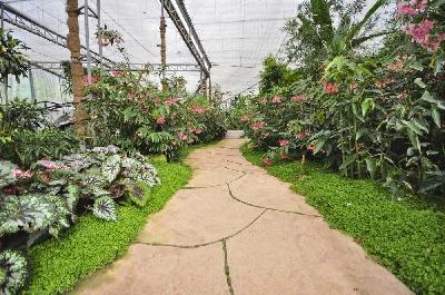 Ботанический сад и оранжерея