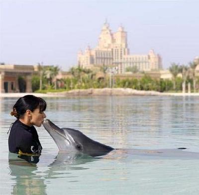 Залив Дельфинов