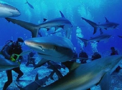 Центр подводного плавания Тарара