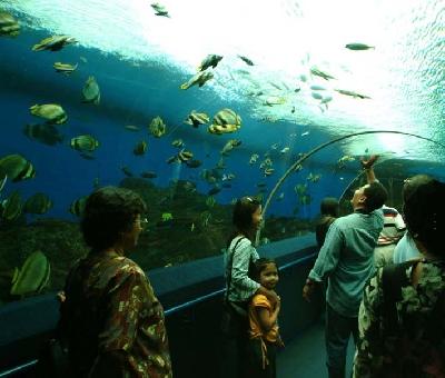 Океанариум «Подводный мир»