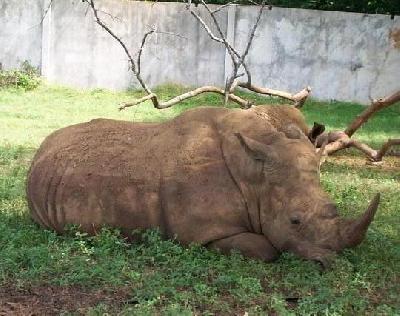 Кубинский национальный зоопарк