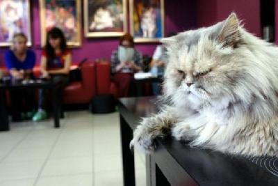 Республика кошек, арт-кафе
