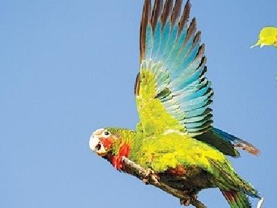 Национальный парк попугаев