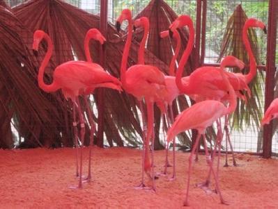 Зоопарк Эмпауэр Велли