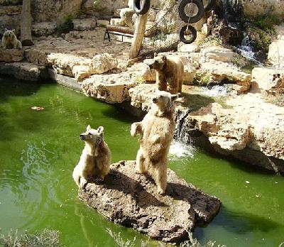 Библейский зоопарк